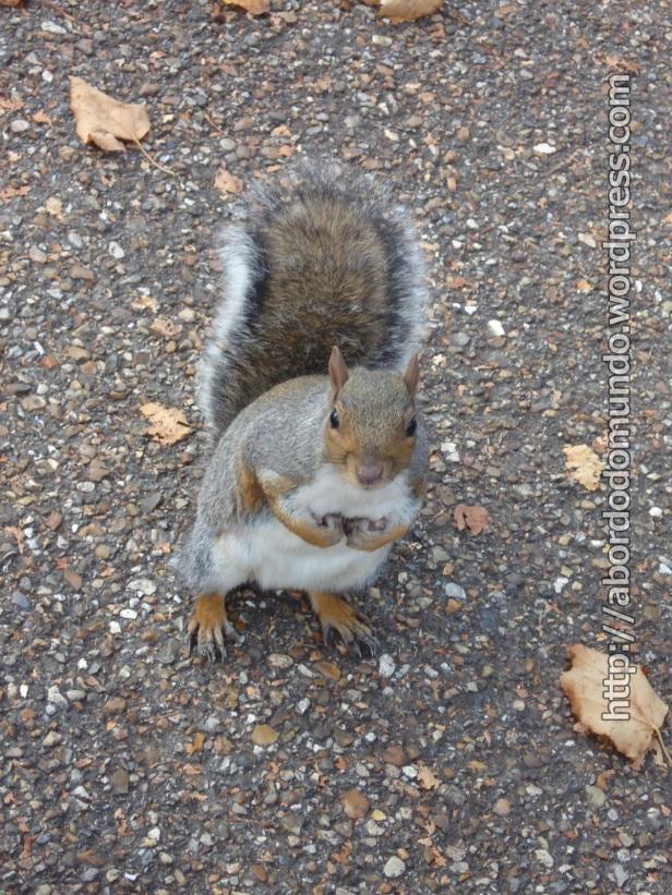 Um esquilinho londrino me perseguiu em busca de comida.