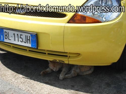 Por falar em trânsito, este gatinho se refugia na sombra de um carro em Ravello, Itália