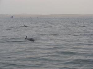 Golfinhos que vieram nos saludar inesperadamente
