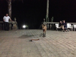Lobo guará vindo comer pertinho da gente. Caraça, Minas Gerais