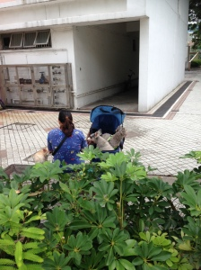 cachorros carrinho bebe Hong Kong abordodomundo